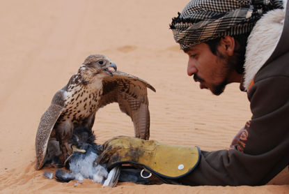 Picture of Falconry Experience